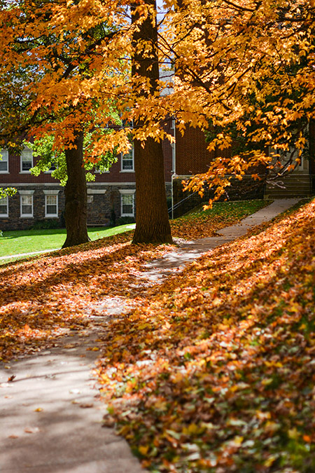 A pathway on campus is covered by leaves and colorful trees.