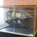A tyrannosaurus rex model in Eaton Hall of Science.