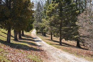 There are trails that travel around McDaniel's fields, which provide a great place for a run, or even a simple walk where one can take a study break and get some fresh air and sun.