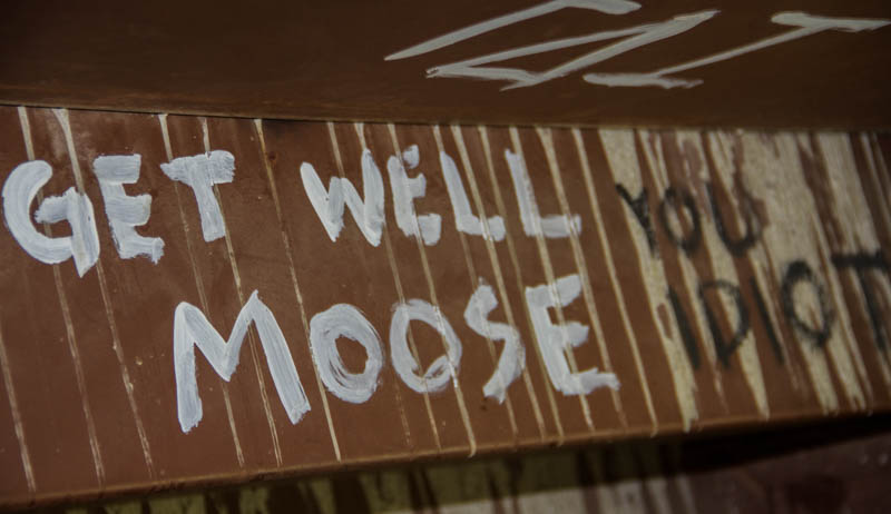 We at the Free Press sincerely hope the moose recovered fully.