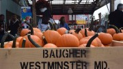 Pumpkins for sale at Baugher's Orchard. Photo by Grace Hounsou.