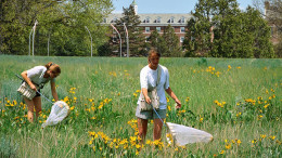 Students sharpening their butterfly and bee catching technique in McDaniel's fields.