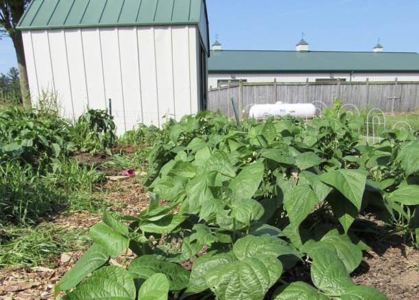 The garden. (Photo courtesy of Elly Engle).