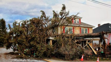 Tornado damage on W. Main Street included many downed trees (Photo courtesy of Shane Robertson).